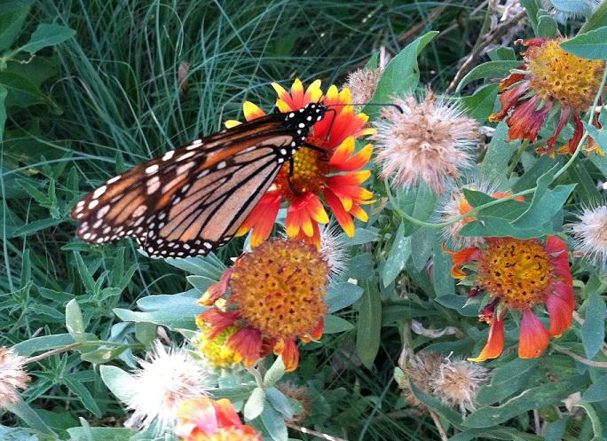 lightworker, mom, butterflies
